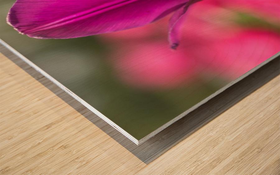 Violet - Violette Wood print