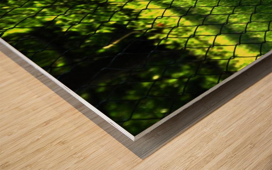 C (2) Wood print