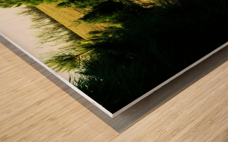 C (4) Wood print