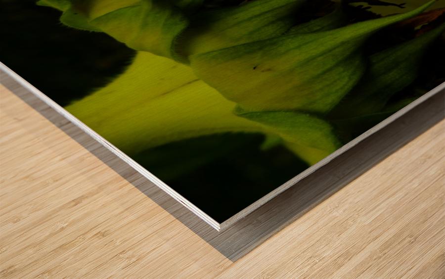 D (13) Wood print