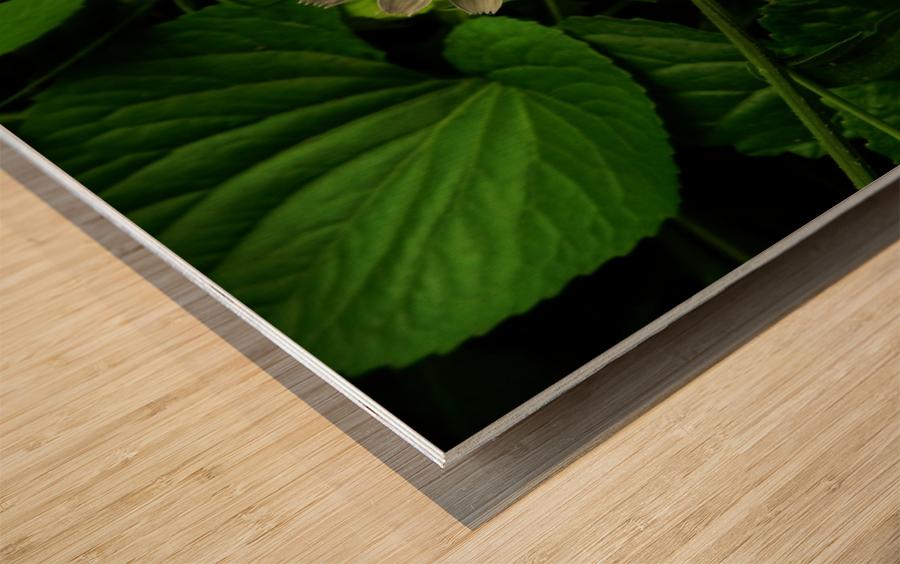 F (12) Wood print