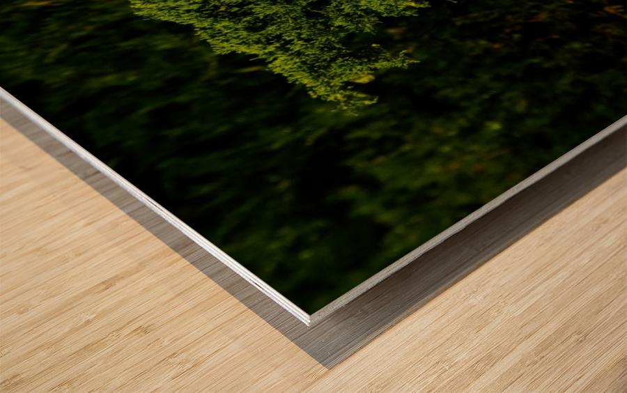 F (15) Wood print
