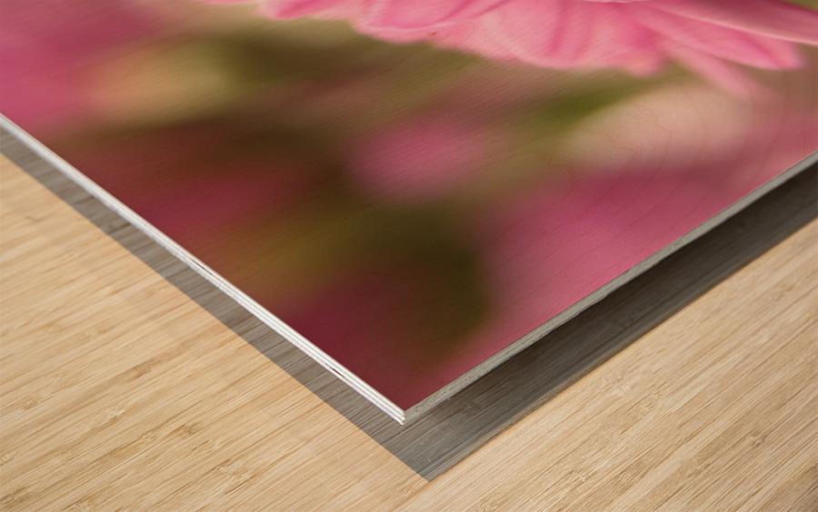Pink Flowers Photograph Wood print