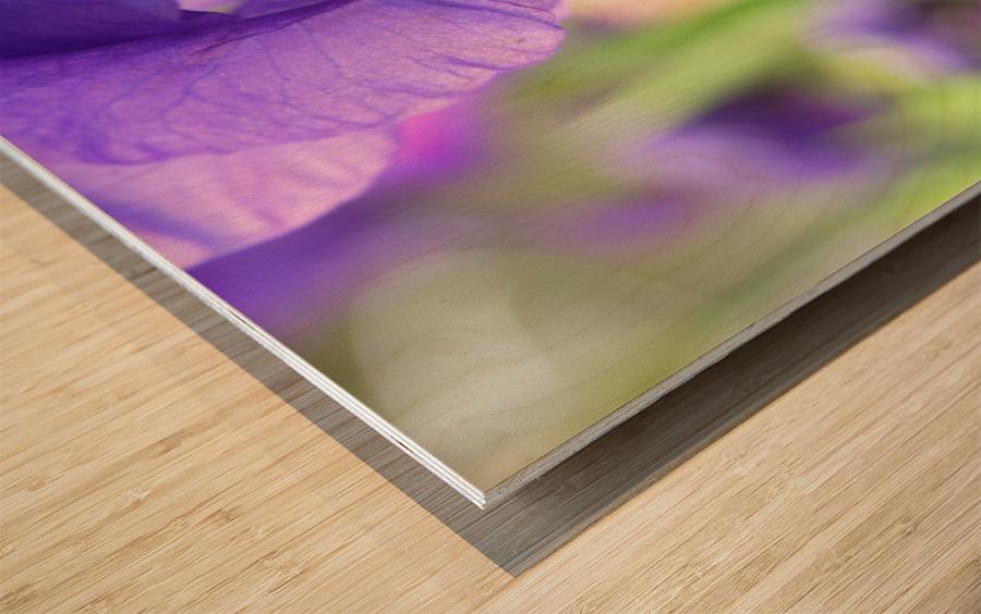 Blue Iris Photograph Wood print