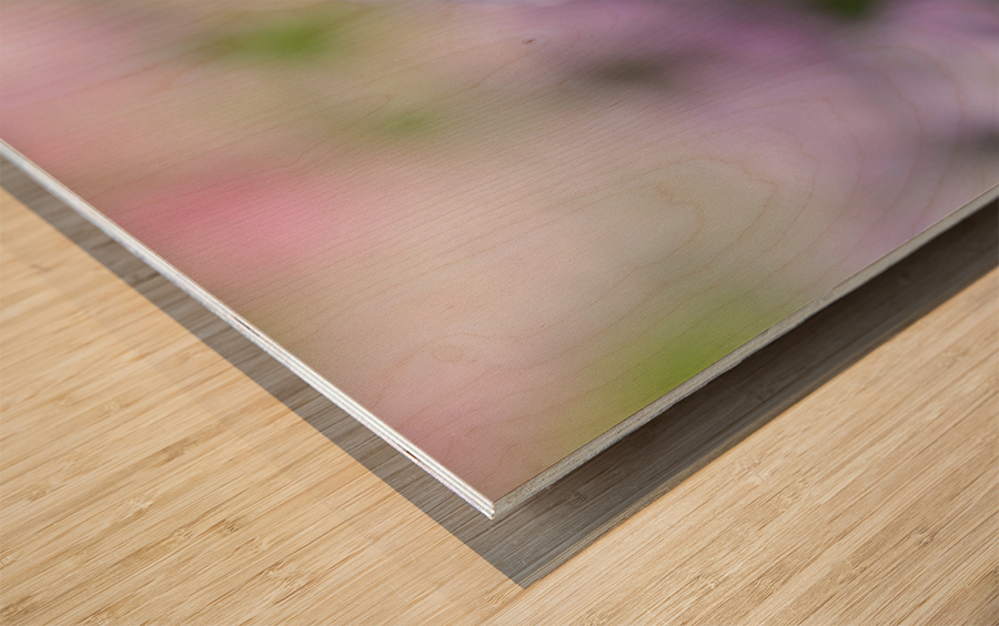 Small Purple White Flower Photograph Wood print