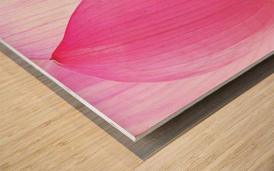 Lily Macro Wood print