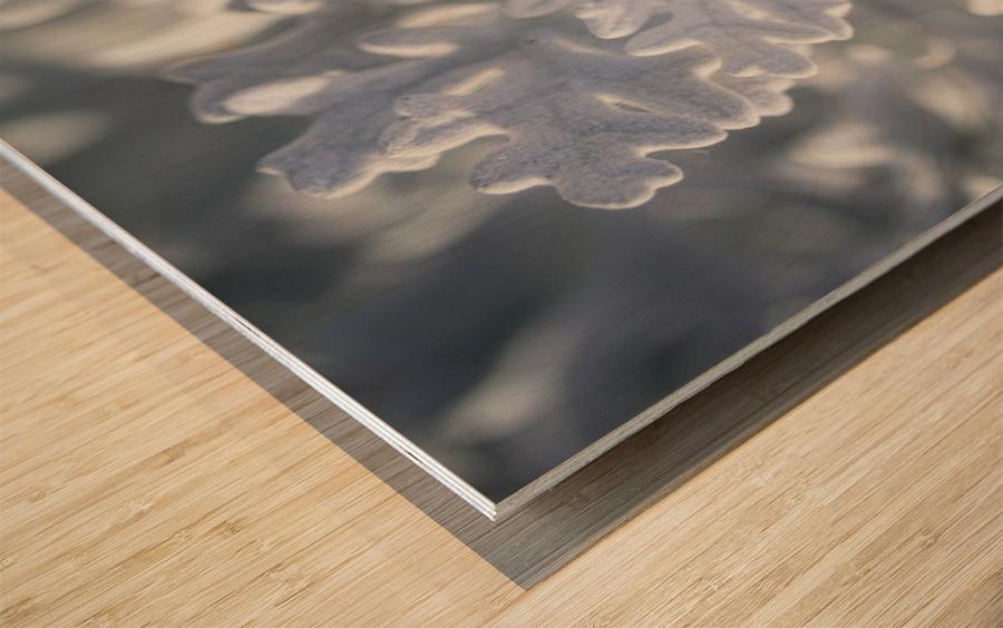 Seaside Cineraria Wood print
