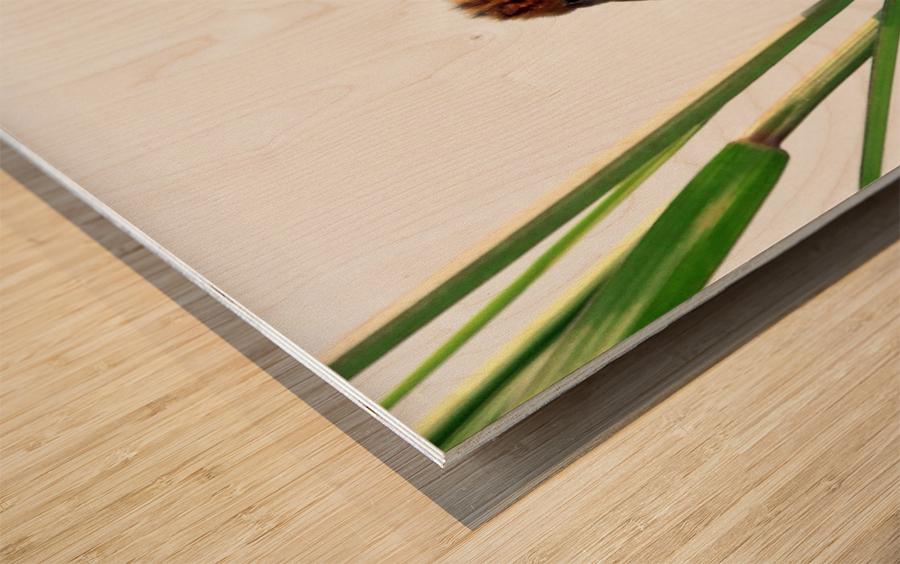 Kung Fu Master Wood print