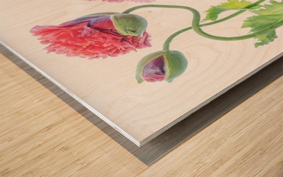 Fancy Wood print