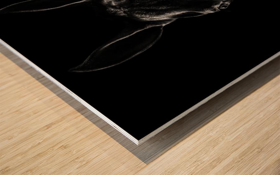 The Horse in Noir Wood print