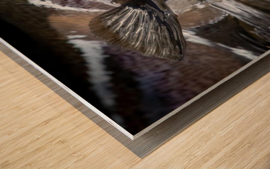 Just a glimpse ..  Wood print