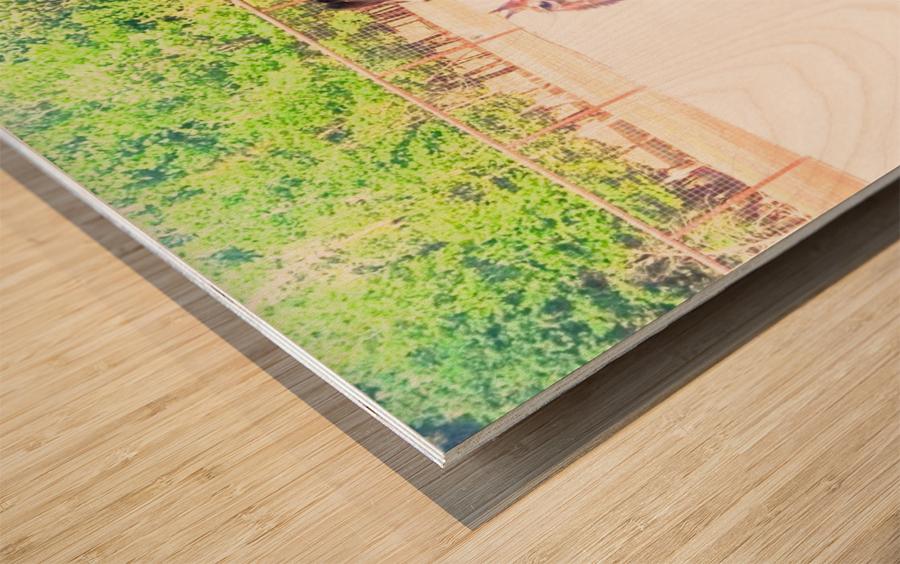 100_0842 4 Wood print
