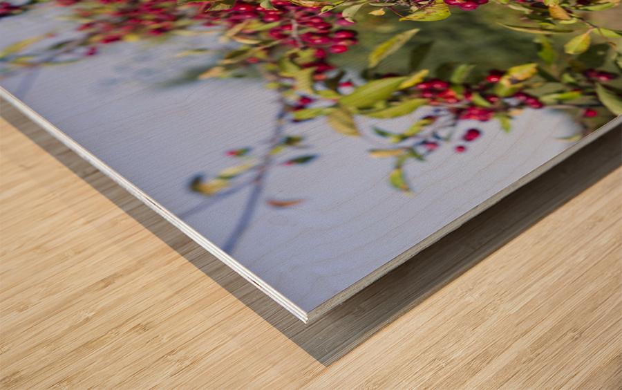 Sumac Bush in Autumn 2 Wood print