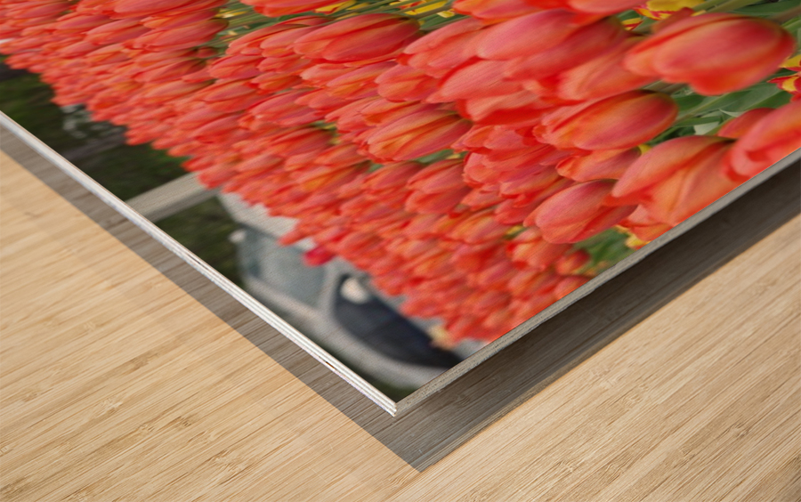 Tullip Bed 7 Wood print