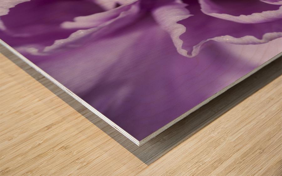Purple Carnation Wood print