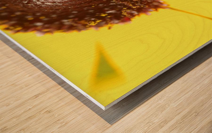 Brown eyed Susan Macro Wood print