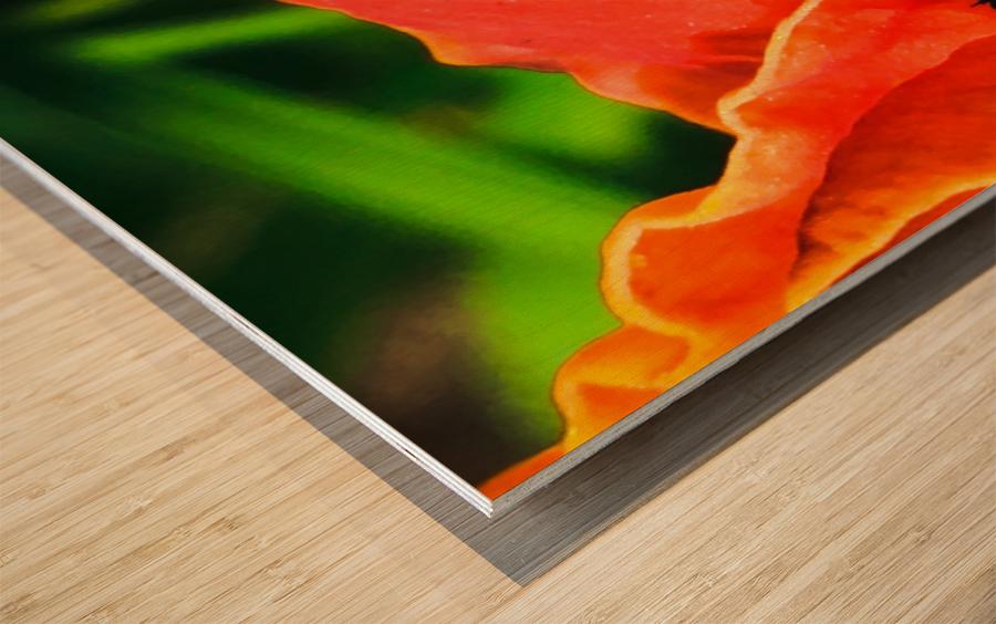 Christina Berard Wood print