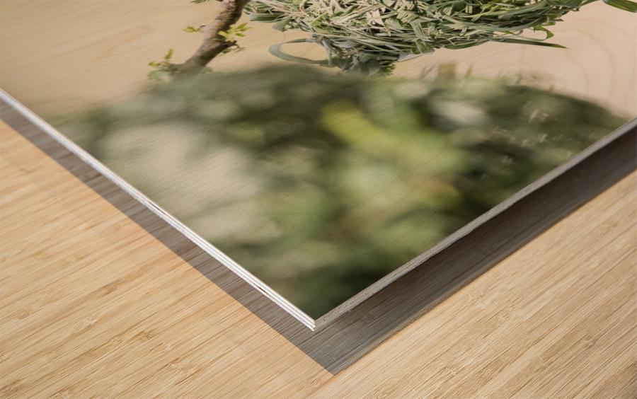 Anybody Home Wood print