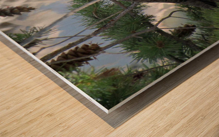 ruffed Wood print