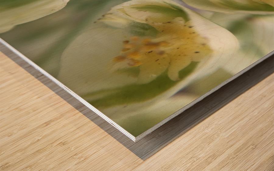 IMG_3383 Wood print