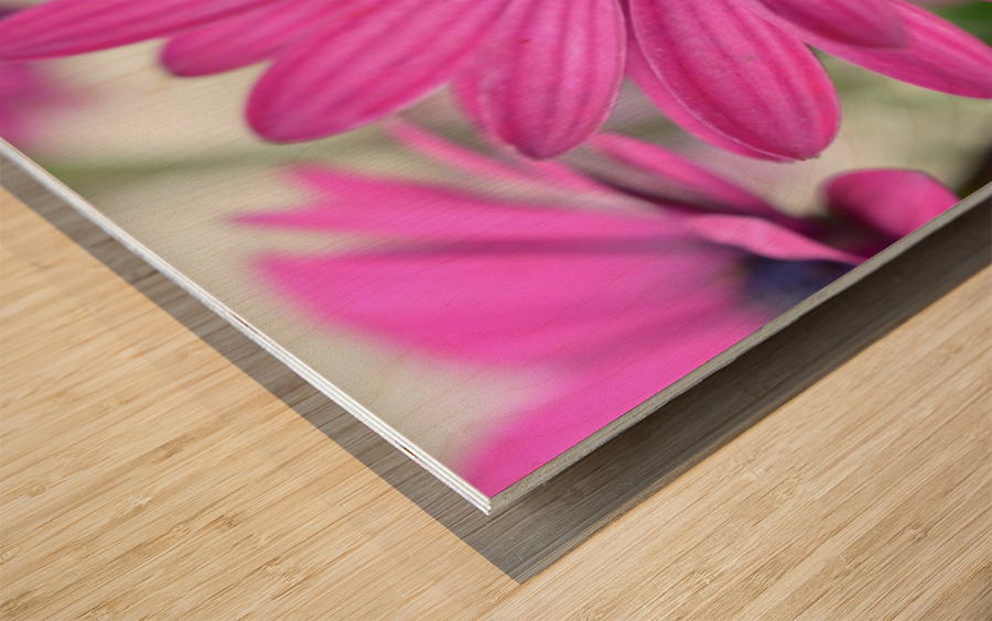 Purple Flower Photograph Wood print