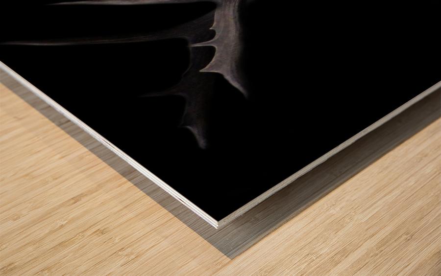 Elk in Black Wood print
