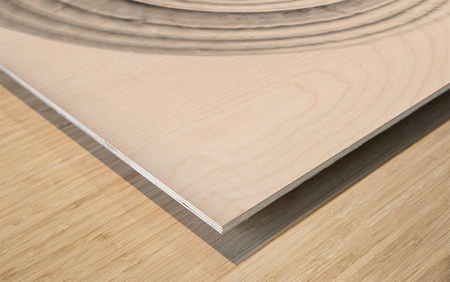 Conch 1 Wood print