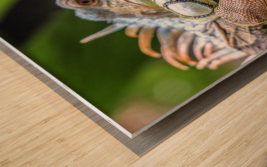The Raptor Wood print