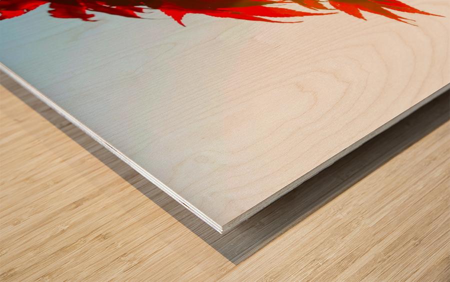 Chinese Maple Impression sur bois
