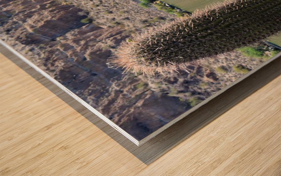 Desert Belle Wood print
