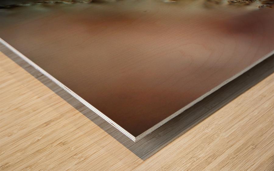 Abstract Macro Nature Photography 50 Wood print