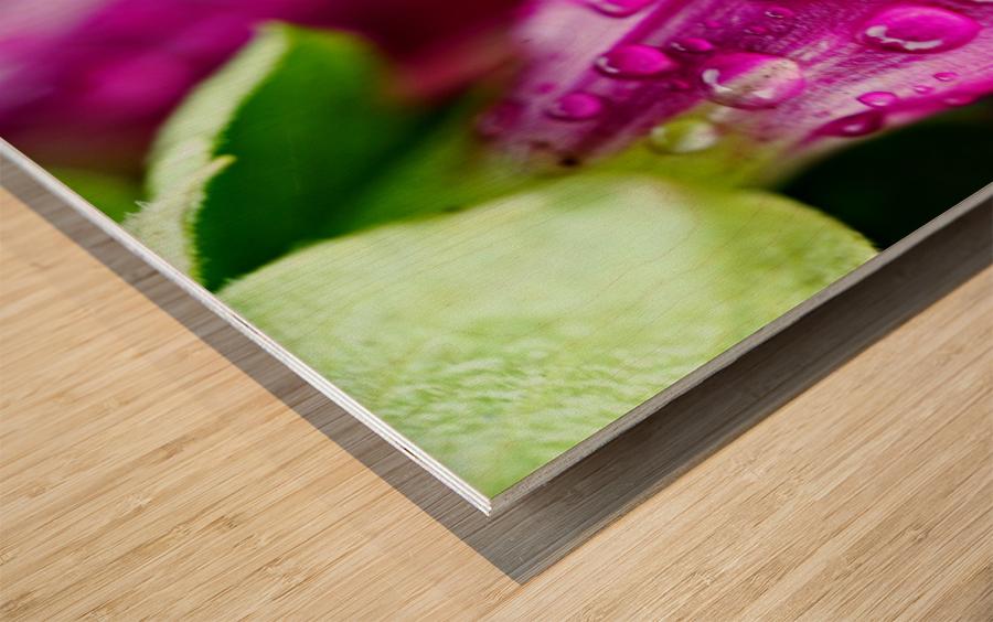 Macro Raindrop Photography Art 06 Wood print