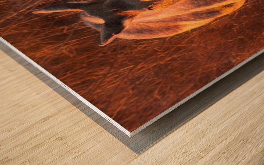 _MG_9282 Wood print