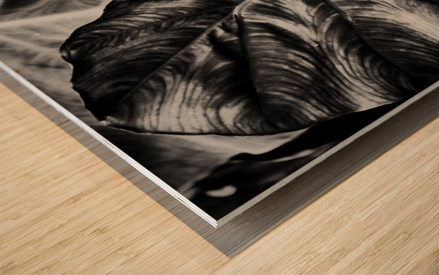 Boldness of Nature Wood print