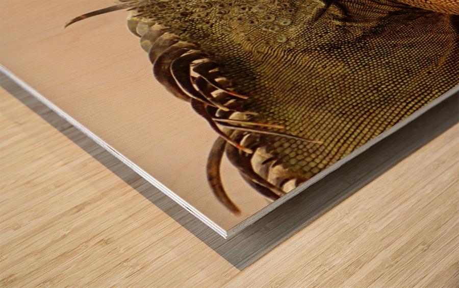 animal reptile lizard iguana Wood print