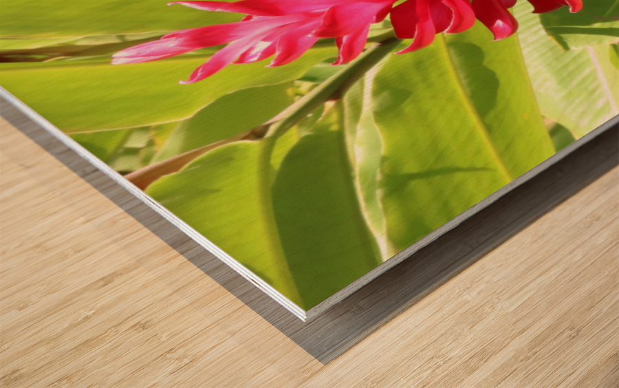 Carribean Beauty Wood print