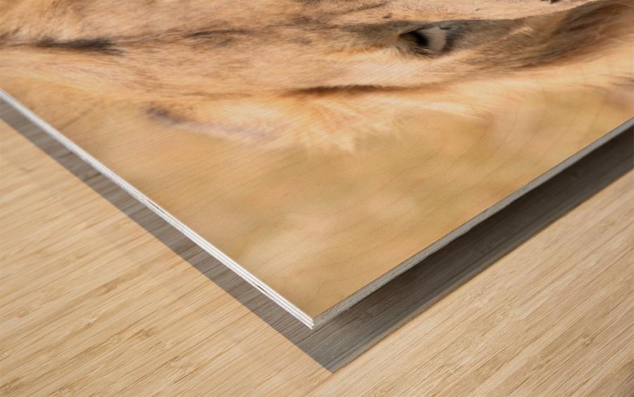 Magnificent Wood print