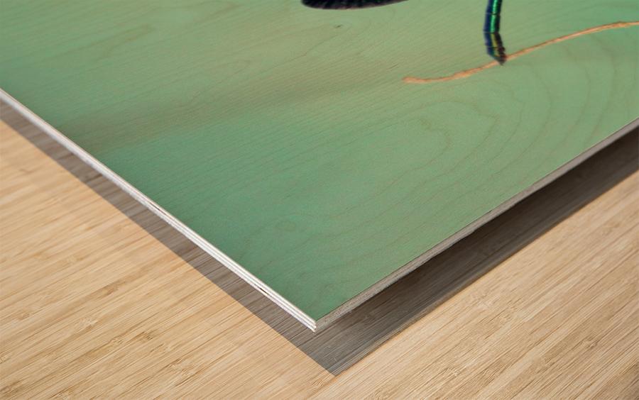 libellule 3 Wood print
