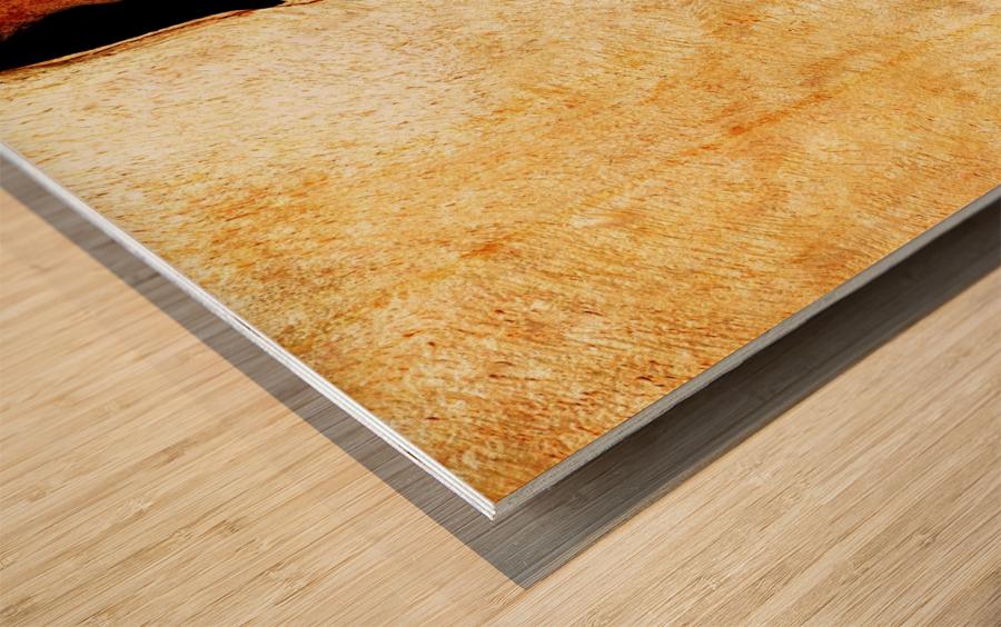 Murray Gum Tree Bark 3 Wood print