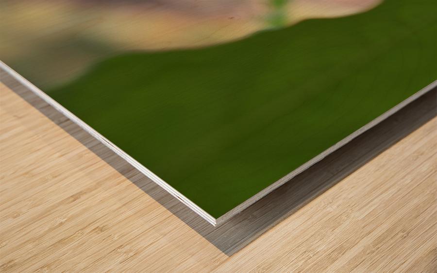 Peeping Frog Wood print