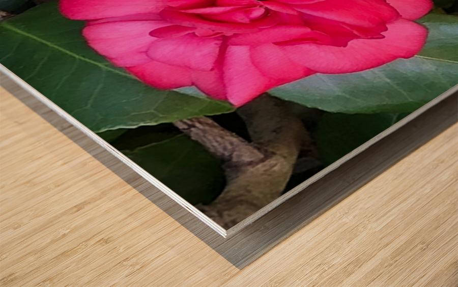 Japanese Camellia Wood print
