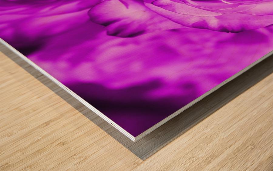 Rose purple  Wood print
