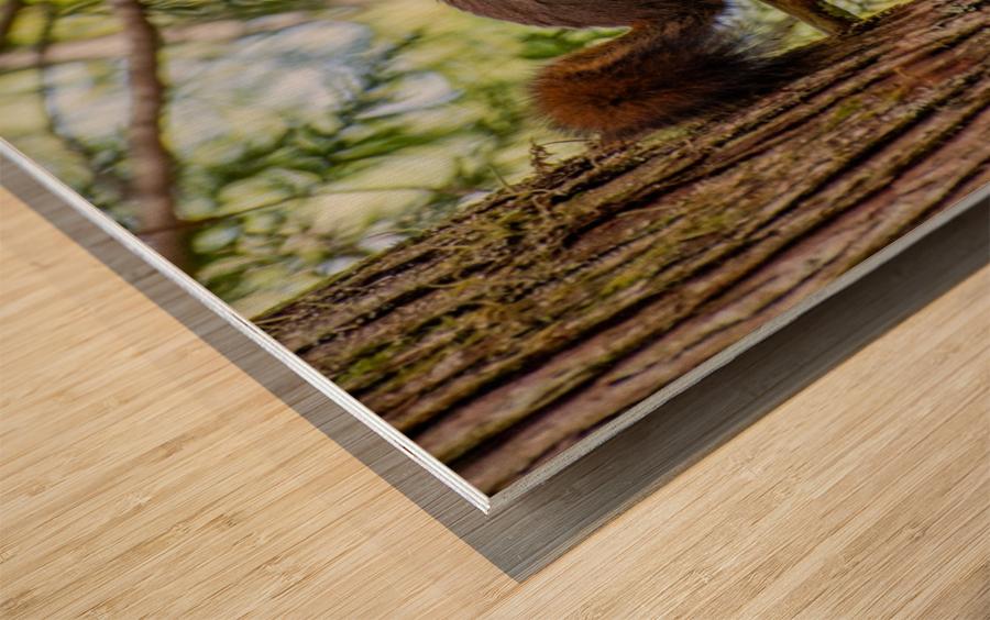 DSC_1971 Wood print