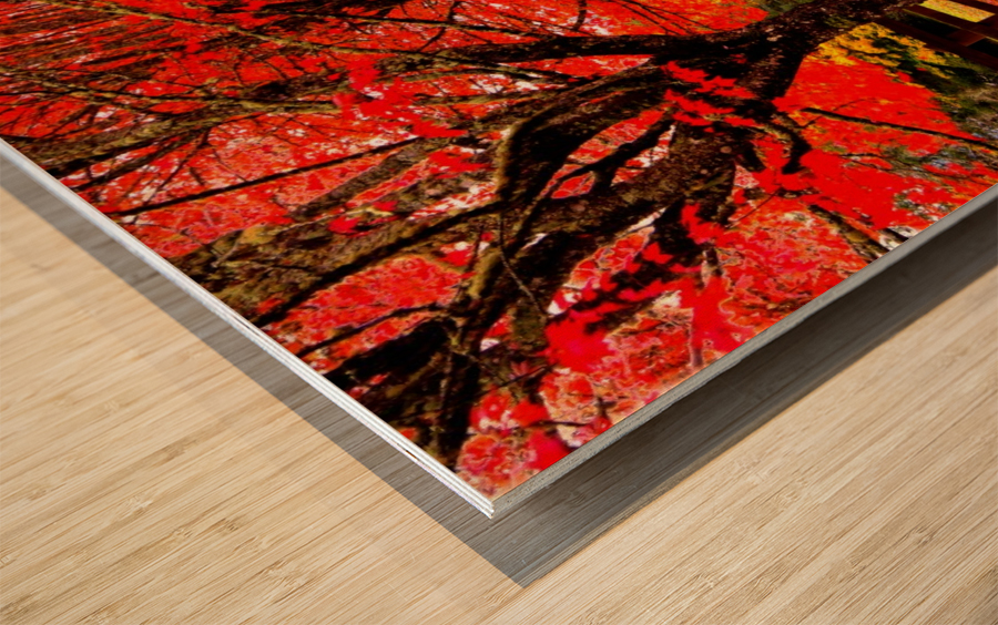 Red Carpet Wood print