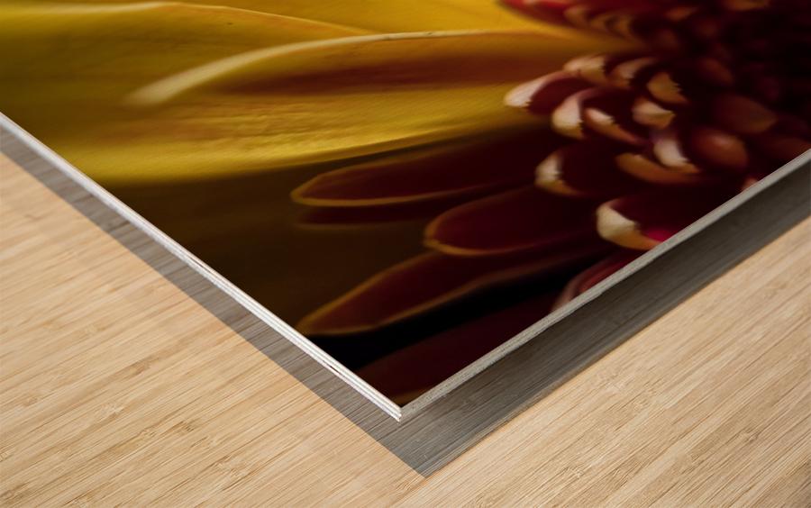 Jaune 2 Wood print