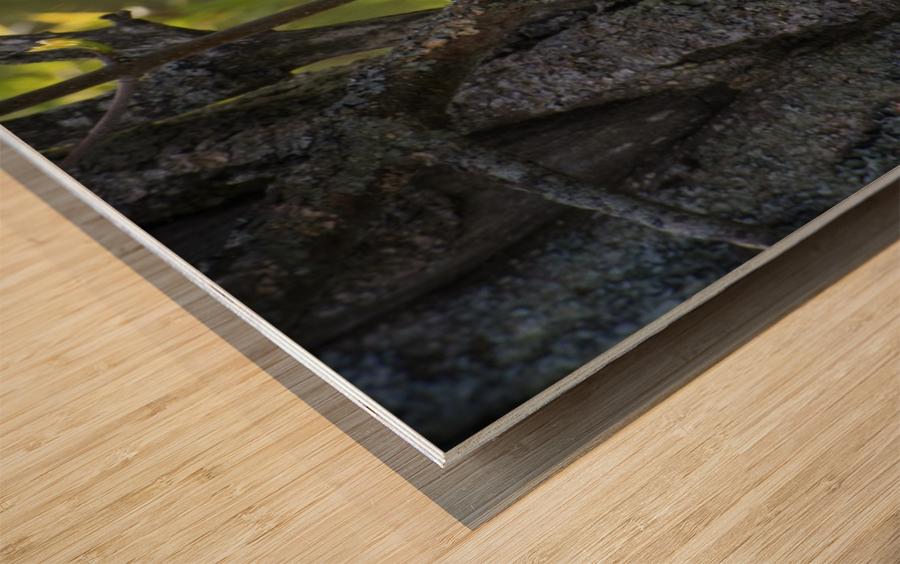 Ent Wood print