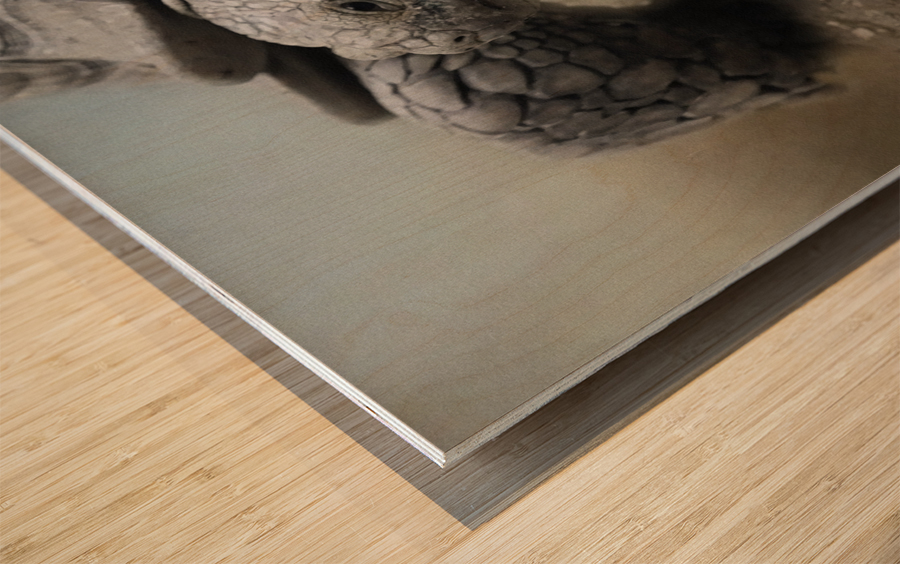 Galapagos Gentle Giant  Wood print