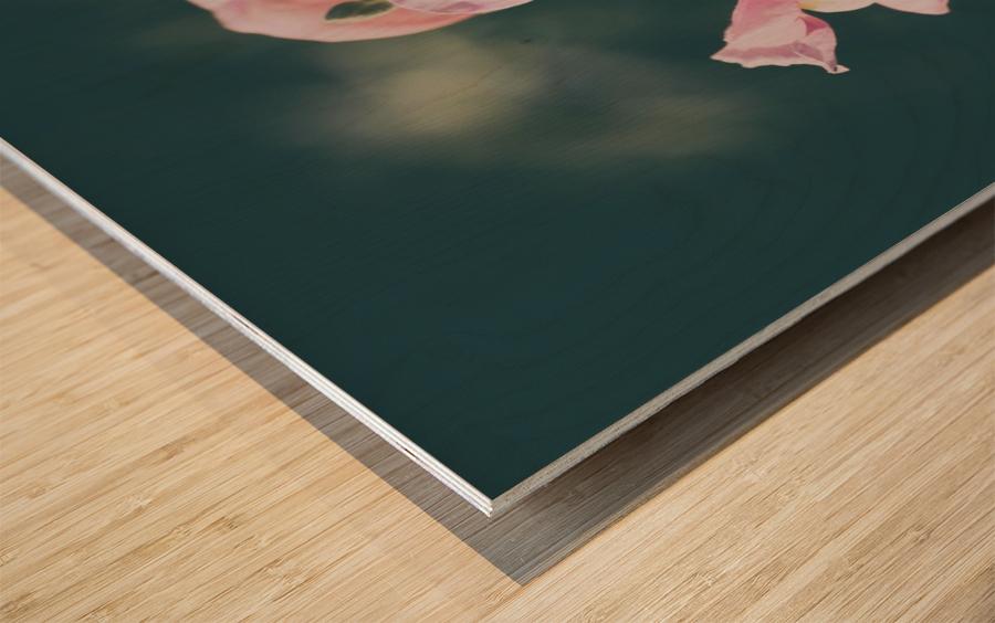 Lupinus Luteus Pink Wood print