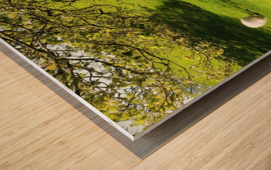 Finding Shade - Northern Ireland Wood print