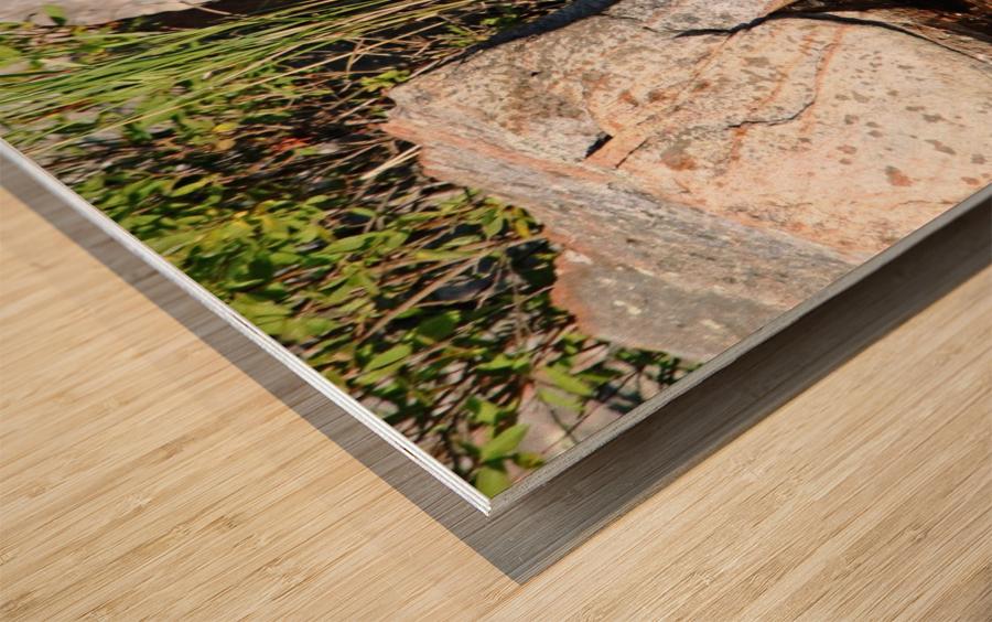 Curiousity Wood print